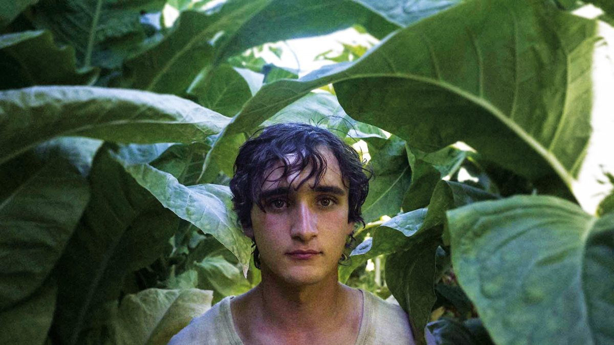 Happy as Lazzaro / Lazzaro felice (Alice Rohrwacher, 2018), Modern Films, Italy, 16 mm, colour, sound, 125 minutes, Lazzaro (Adriano Tardiolo)